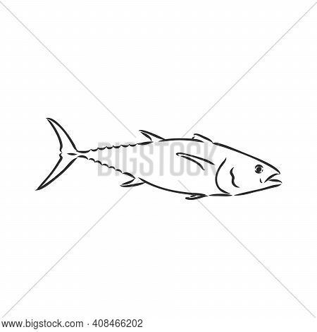 Vector Illustration Of Tuna. Vector Illustration Can Be Used For Creating Logo And Emblem For Fishin
