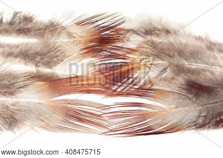 Downy Part Of The Feather. Wild Partridge Feather Textures For Background, Fantasy, Abstract, Soft C
