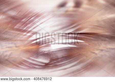 Abstract Blurred Delicate Background. Defocused Background Movement Of Bird Feathers. Stylish Abstra