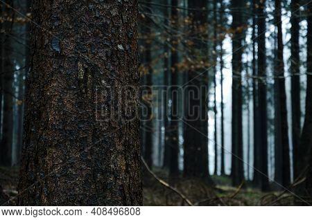 To Zdjęcie Przedstawia Drzewo Na Tle Lasu