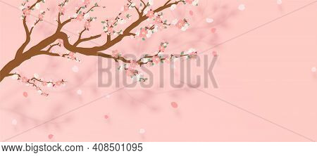 Blossoming Branch Of Sakura - Japanese Cherry Tree With Falling Petal. Beautiful Cherry Blossom Pink