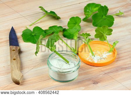 Cuttings Of Geranium And Stimulator. Breeding Of Plants With Stimulator Powder. Knife For Cutting.