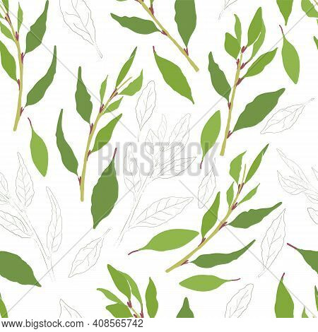 Seamless Pattern With Colored And Outlined Laurel Leaves And Twigs. Laurel Branches And Leaves Isola