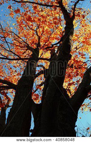 Autumn Arrival