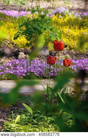 Red Tulips Blooming In The Garden. Beautiful Nature Background. Easter Holidays Concept