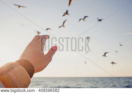 Womans Hand In Sunlight Close-up Trying To Reach Out Seagulls