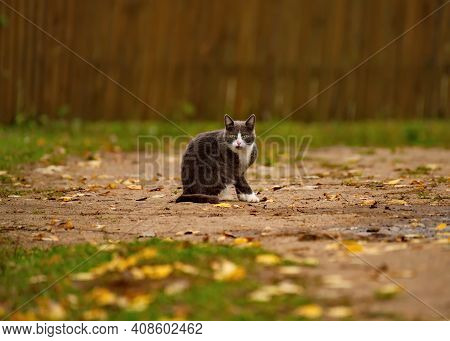 Russia. Moscow Region, Istra. Portrait Of A Young Cat On The Background Of A Village Fence.