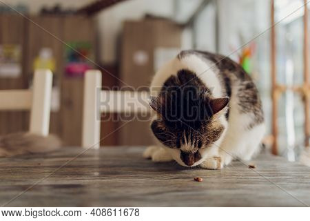 Cat Sits On A Chair At The Table With A Plate And Fork. Cat Food Concept,