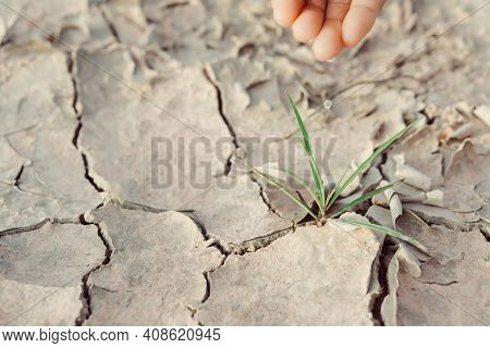 Watering Seedlings Are Growing From Arid Soil With Morning Sun Is Shining, Concept Of Global Warming