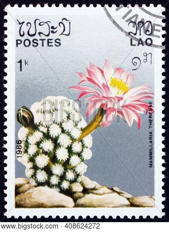 Laos - Circa 1986: A Stamp Printed In Laos Shows Mammillaria Theresae, Is A Cactus Native To Mexico,