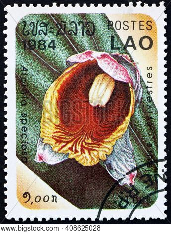 Laos - Circa 1984: A Stamp Printed In Laos Shows Shell Ginger, Alpinia Speciosa, Is A Perennial Spec