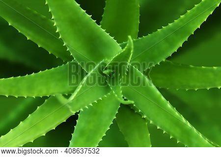 Aloe Vera Leaf Nature, Aloe Vera Herb, Aloe Vera In Top View