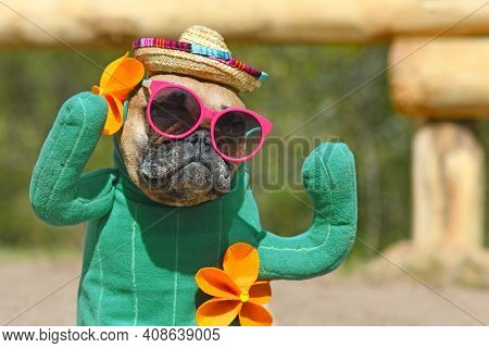 Portrait Of Funny French Bulldog Dog Dressed Up With Cactus Costume With Fake Arms And Orange Fowers