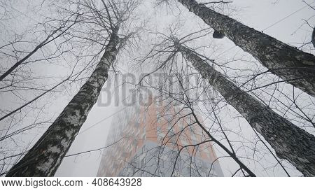 Birch Trees In Fog. Action. Mysterious Fog Envelops Winter Of Birch. Cloudy Winter Weather In Suburb