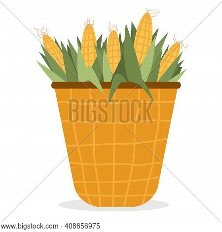 Vector Illustration With Corn Cobs In Wicker Basket. Yellow Corn In Basket