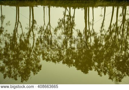 A Beautiful Trees Reflected In A Pond In A Village Or Shadow Of Trees Branches Is Reflected In Water