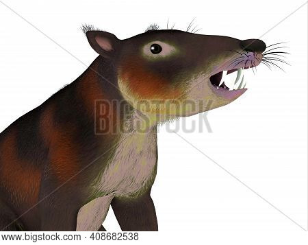Cronopio Mammal Head 3d Illustration - Cronopio Is An Extinct Carnivorous Mammal That Lived In South
