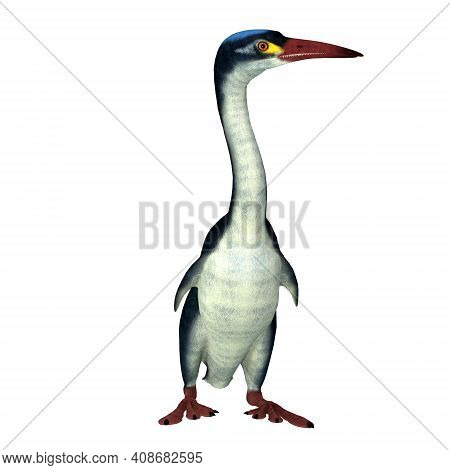 Hesperornis Bird Front 3d Illustration - Hesperornis Is An Extinct Cormorant-like Bird That Lived In