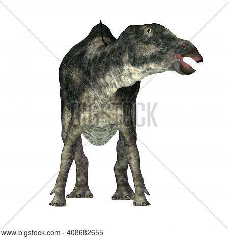 Maiasaura Dinosaur On White 3d Illustration - Maiasaura Was A Herbivorous Duck-billed Hadrosaur Dino