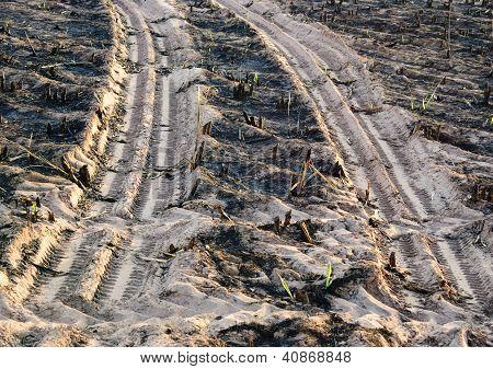 Truck foot print in sugar cane farm
