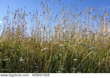 Grass Field With Tall Grass On The Farm.