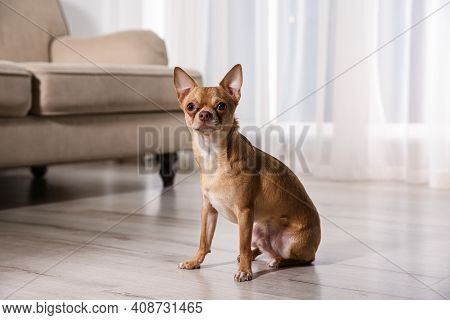 Cute Chihuahua Dog Sitting On Warm Floor Indoors. Heating System