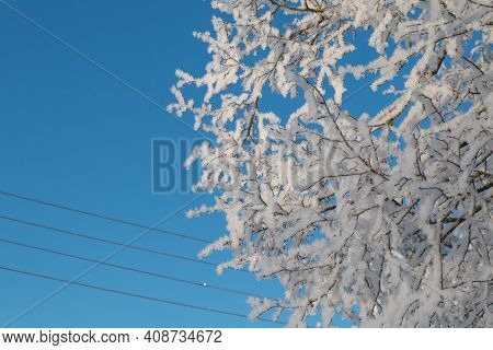Frosted Tree Branch In Winter. Sunny Winter Day