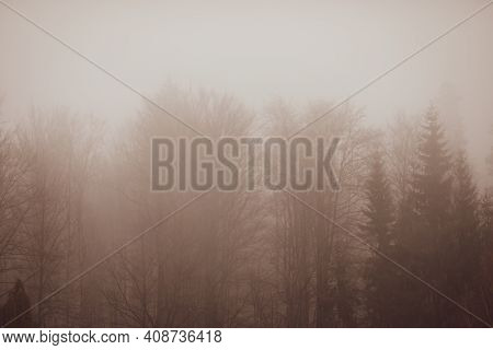 Mist And Sleet Storm Over A Cone Tree Forest In The Romanian Carpathian Mountains During A Cloudy An