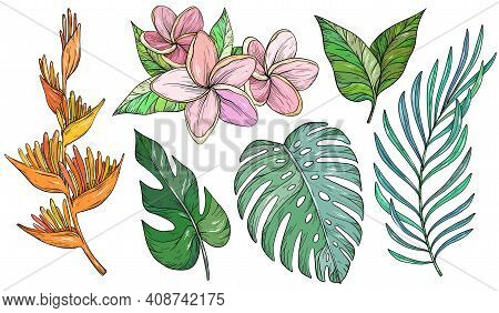 Vector Set Of Tropical Leaves. Palm, Banana Leaf, Monstera, Heliconia And Frangipani Flowers