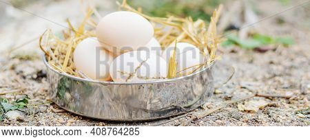 Fresh Chicken Eggs In The Hay On A Farm. Selective Focus