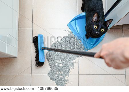 Pet Mistress Sweep Cat Litter By Broom, Naughty Cat Scattered The Litter Of Filler For Cat Tray