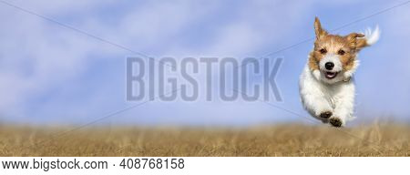 Web Banner Of A Cute Happy Healthy Smiling Pet Dog Puppy As Running In The Grass. Spring, Summer Wal