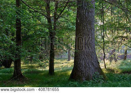 Light Entering Rich Deciduous Forest