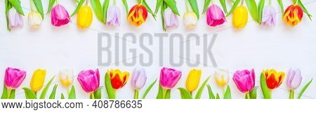 Spring background, spring tulip flowers on the white wooden background, easter spring border. Spring flower background, spring  tulip flowers, easter spring frame, spring flowers, spring composition. Spring background with spring flowers, spring still lif