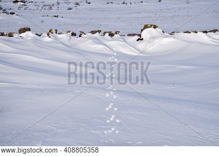 Animal Tracks In The Snow By An Old Dry Stone Wall By Stora Alvaret, A World Heritage Site In Sweden