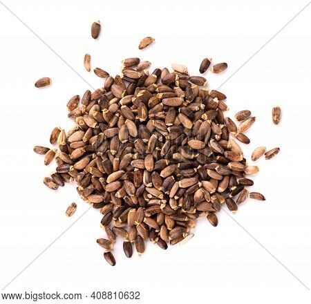 Milk Thistle Seed, Isolated On White Background. Silybum Marianum, Scotch Thistle Or Marian Thistle.