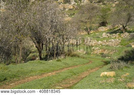 A Trail In The Judea Mountains, Israel, Passing Among Ancient Agricultural Terraces And Almond Trees