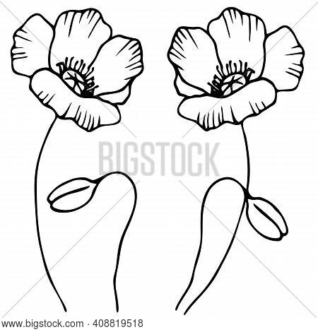 Vector Stock Illustration, Stylized Poppy Flower In Black And White, Ornament For Tattoo, Isolate On