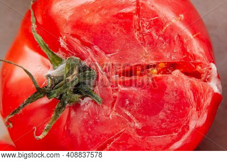 A Rotten Moldy Smashed Red Tomato Close Up Top View. Fresh Vegetable With Desease
