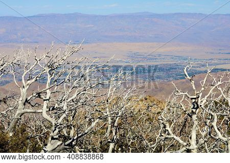 Burnt Chaparral Shrubs On A Windswept Plateau Caused Fram A Past Wildfire Overlooking The Colorado D