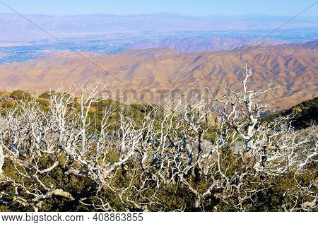 Burnt Chaparral Shrubs Caused From A Past Wildfire On A Mountain Ridge Overlooking The Colorado Dese