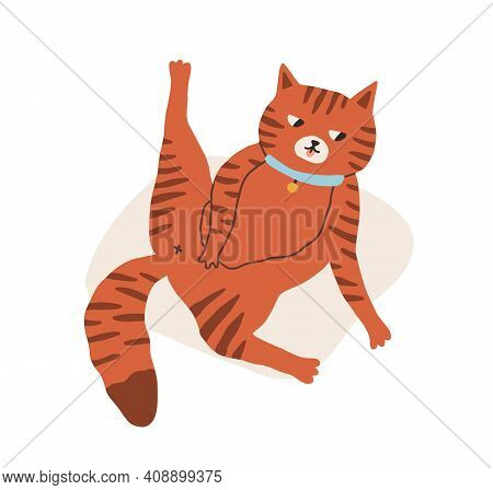 Cute And Funny Cat Grooming And Washing Itself And Lying Belly Up With Raised Back Paw. Adorable Kit
