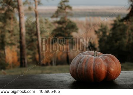 Pumpkin In The Forest On The Bench. Halloween Pumpkin In The Forest. Autumn Forest. Pumpkin For Hall
