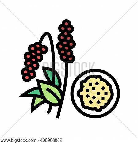 Amaranth Groat Color Icon Vector. Amaranth Groat Sign. Isolated Symbol Illustration