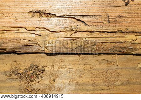 The Texture Of Old, Worm-eaten Wood. Dry Rotten Board