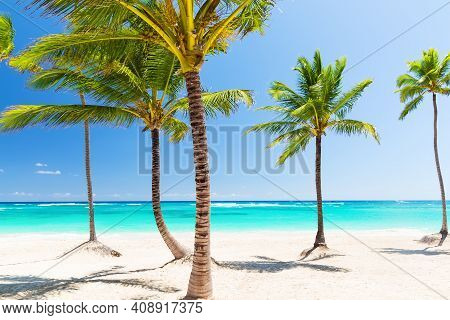 Coconut Palm Trees On White Sandy Beach In Cup Cana, Dominican Republic. Vacation Holidays Backgroun