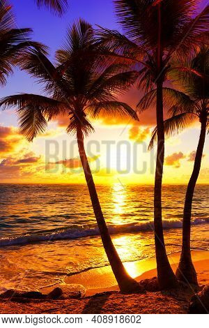 Coconut Palm Trees Against Colorful Sunset. Dark Silhouettes Of Palm Trees And Beautiful Cloudy Sky