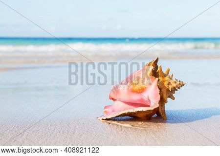 Big Seashell On The Summer Beach In Sea. Summer Time Background.