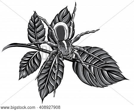 Monochromatic Vector Illustration Of A Spider Web In A Rainforest