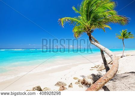 Coconut Palm Tree Against Blue Sky And Beautiful Beach In Punta Cana, Dominican Republic. Vacation H